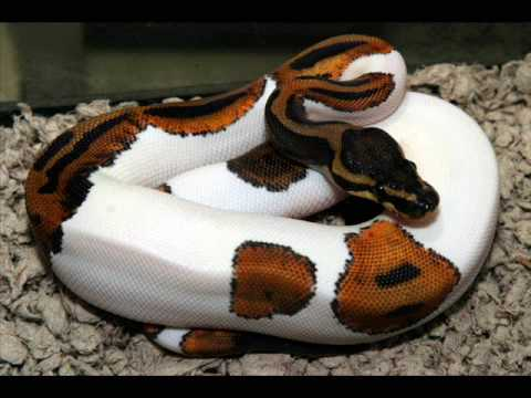 Beautiful snakes.wmv