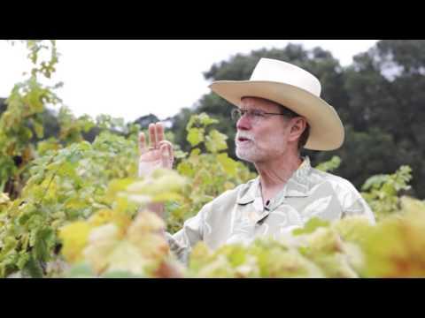 Dickerson Vineyard - Ravenswood Winery