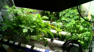 Hydroponic Garden Timelapse