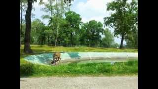 Pombia Italy  city photos : Video - Safari Park Pombia Italia - Amazing