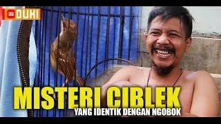 Video MISTERI Burung CIBLEK Yang Konon Harus Di OBOK Terlebih Dahulu MP3, 3GP, MP4, WEBM, AVI, FLV Februari 2019