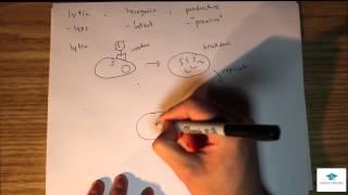 MCAT Biology Lecture: Virus