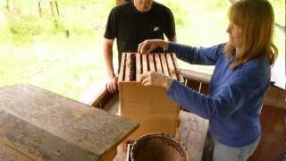 Moving Bees Into A Warre Hive