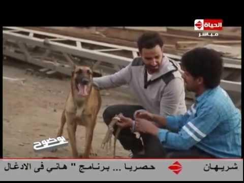 عمرو الليثي يكشف خطأ في فيلم كلب بلدي في برنامج بوضوح