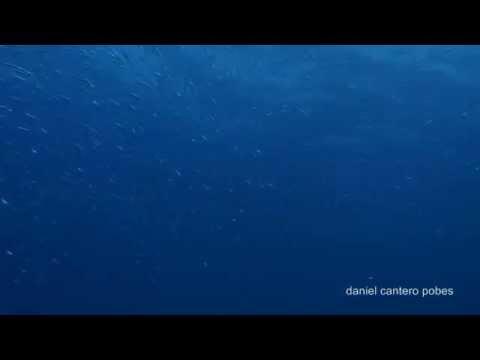 Buceo en lanzarote julio 2014
