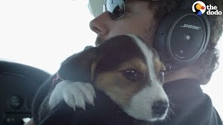 Pilots Help Dogs Find Forever Homes  | The Dodo by The Dodo