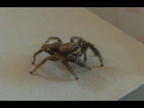 當雷射光射出的那一刻蜘蛛似乎愣住了,但牠下一秒的行動真的把我嚇壞了!