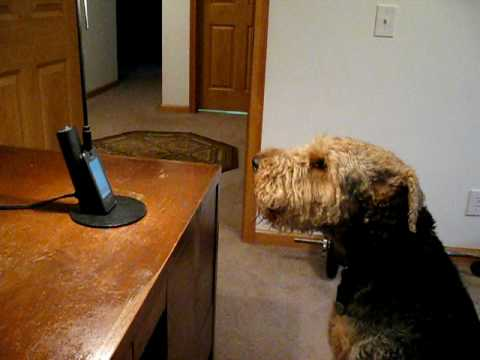 Talkative Dog Chats With His Mom On The Phone