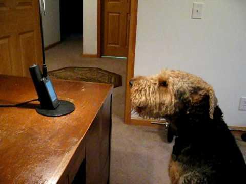 una donna parla al telefono al suo cane... e lui risponde!