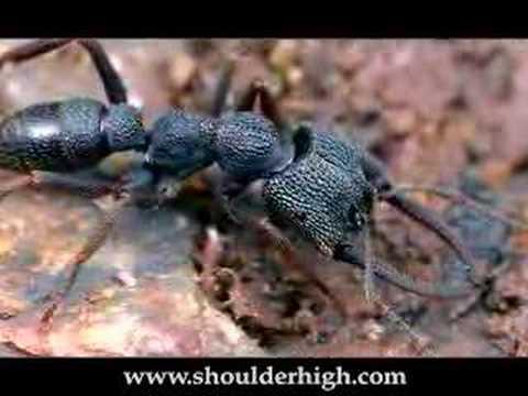 Mravenci jako zásobárna jedu