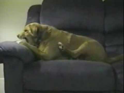 Un chien très con… mais très fun