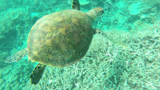 Heron Island Australia  city photos : Our trip in Australia Episode 9: Heron Island (great barrier reef)