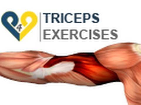 Triceps Exercises : dips 2 benches
