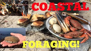 Video Coastal Foraging , Cook Up On The Beach - Ormers / Abalone , Lobster , Clams and More ! MP3, 3GP, MP4, WEBM, AVI, FLV Juni 2019