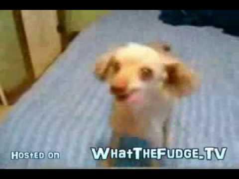 Dog With Really Strange Bark