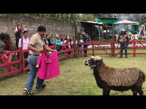 Corrida de Borregos - Familia Vilatuña