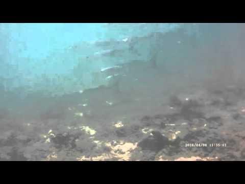 Barracuda galore! Scuba Diving Sri Lanka Taprobane Divers Trincomalee