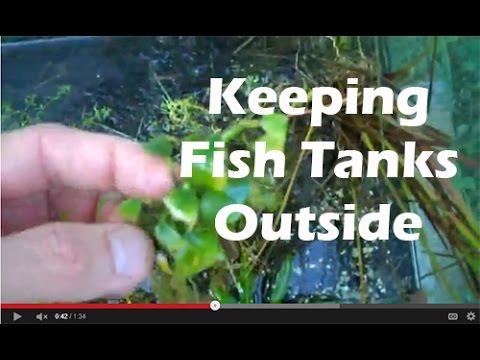 Fishtanks outside three videos of growth