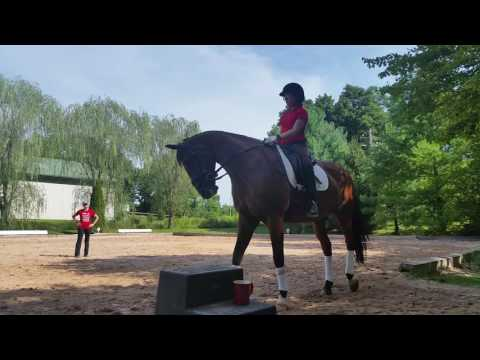 Sofia on school horse at pa riding academy(1)