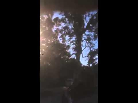 albero caduto ai marmi - video di Leonardo Caldarera