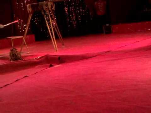В Тольятти во время представления леопард набросился на детей (видео)