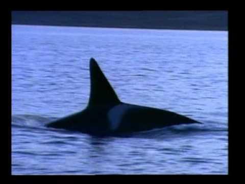 Mi MICSODA – Bálnák és delfinek