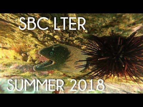 LTER: Summer 2018 Highlights