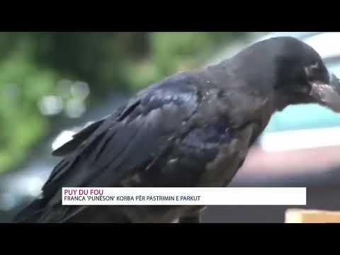 Franca 'punëson' korba për pastrimin e parkut – KURIOZITET ZICO TV
