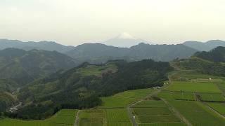 空撮 / 富士山と茶畑