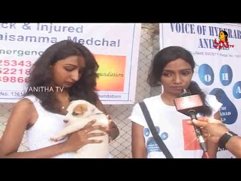 GHMC Launches Innovative Dog Adoption Programme || Hyderabad || Vanitha TV