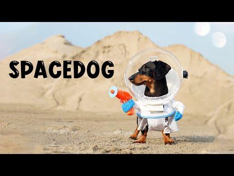 Ep 3: SpaceDog Cru & The Big Bone - Wiener Dog in Space!
