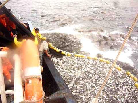 L/M Garota 1 (guanaqueros) pesca de cerco
