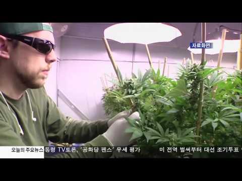 컴튼시 또 불법 마리화나 적발 10.05.16 KBS America News