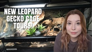 My New Leopard Gecko Cages! | Naturalistic Cage Tour by Emma Lynne Sampson