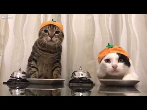 Two Cats Asking For Food