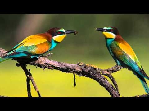 Aves de la Sierra Norte de Málaga