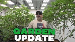 Remo's Garden Update (Day 8 Flower) by Urban Grower