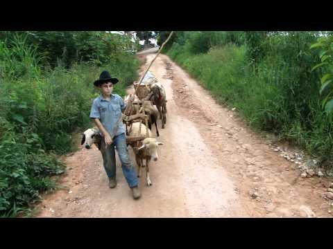 Menino de 9 anos fazendo compras de carro de carneiro em Muzambinho/MG