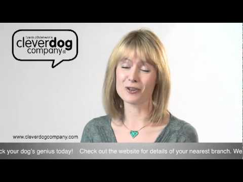 Clever Dog Company – Are some breeds more intelligent than others?