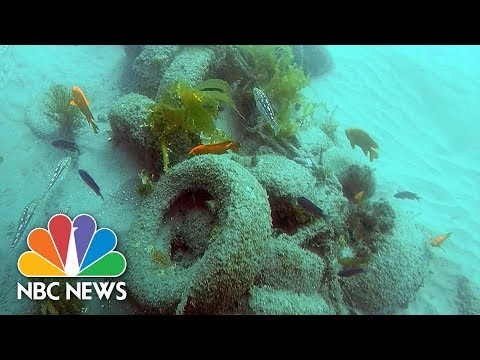 'Toxic' Experimental Reef Off California Removed By Divers | NBC News