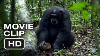 Nonton Chimpanzee Movie Clip   Tools  2012  Disney Nature Movie Hd Film Subtitle Indonesia Streaming Movie Download