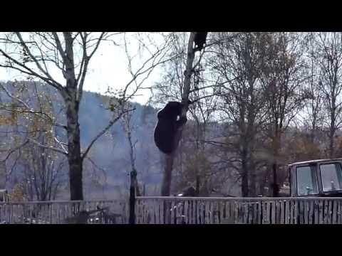 俄羅斯人目擊到鄰居被大黑熊攻擊,竟然無動於衷!