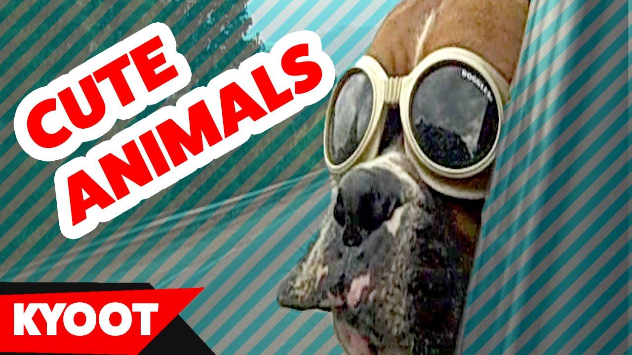 Smešni video snimci sa životinjama