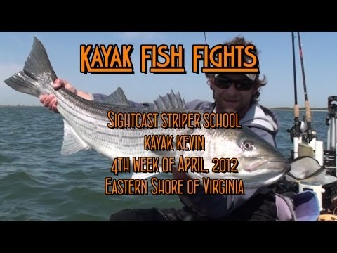 Sightcast Striper School.  - kayak fishing, kayak photos, kayak videos