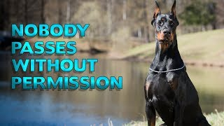 Video Dogs That Will Always Have Your Back | Top 10 Best Guardian Dogs for your Home MP3, 3GP, MP4, WEBM, AVI, FLV Juli 2019
