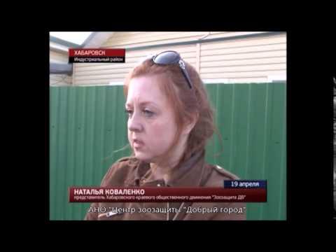 В Хабаровске подростки до смерти замучили собаку.