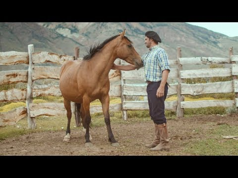 Taming a wild Patagonian horse