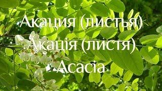 Акація (листя)