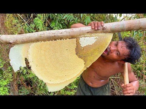 Five Stars Bushman Harvesting Honey Beehive in Jungle
