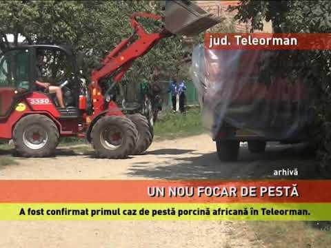 Primul caz de pestă porcină africană din județul Teleorman, confirmat